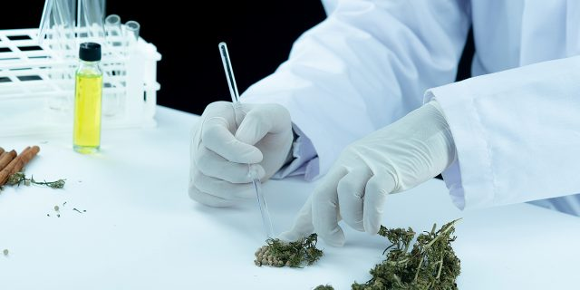 doctor-hand-hold-offer-patient-medical-marijuana-oil